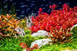 Plant Care & CO2